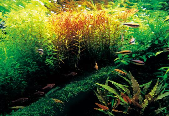 terrestrial and aquatic plants