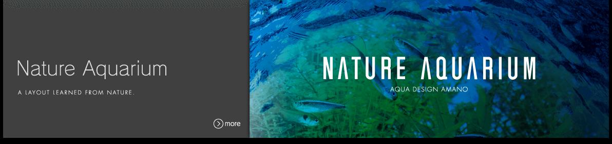 Attractive What Is Nature Aquarium?