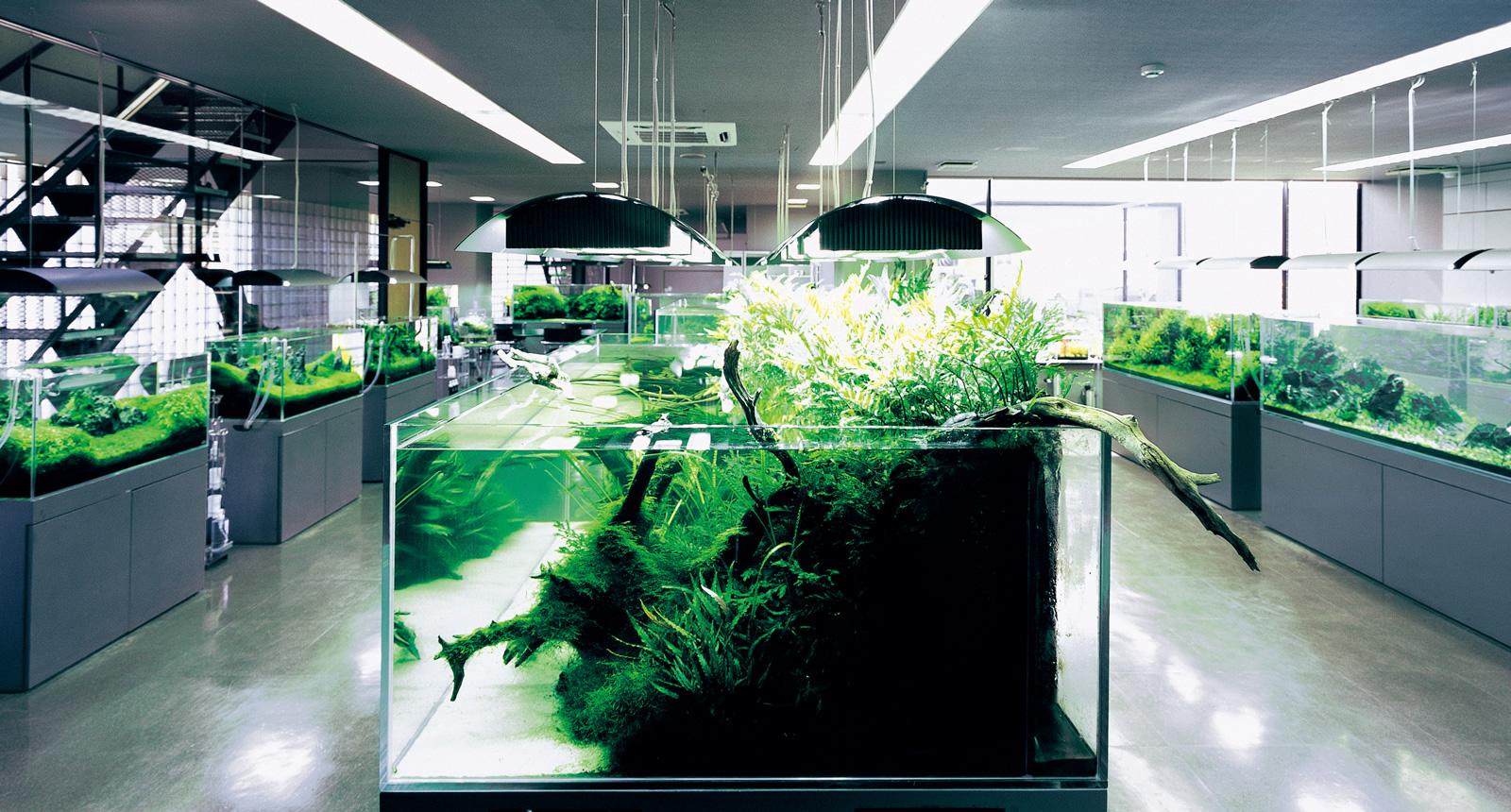 Nature Aquarium Gallery Ada Nature Aquarium