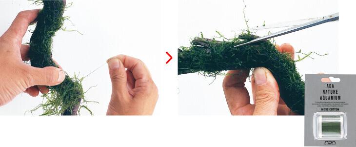 Rêu liễu