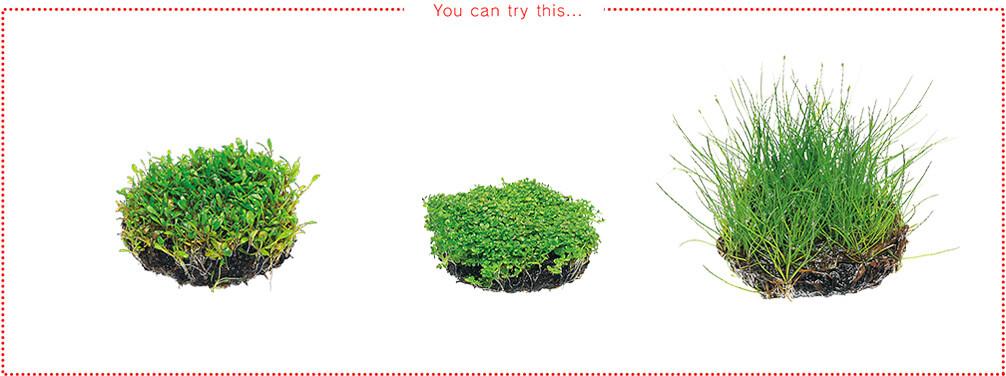Hồ thủy sinh trồng cây dễ dàng với Wabi-kusa - Cây trồng tiền cảnh