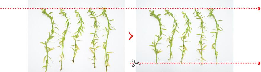 Chiều cao của mỗi loài thực vật thân cây nên được căn chỉnh càng nhiều càng tốt trong quá trình trồng.