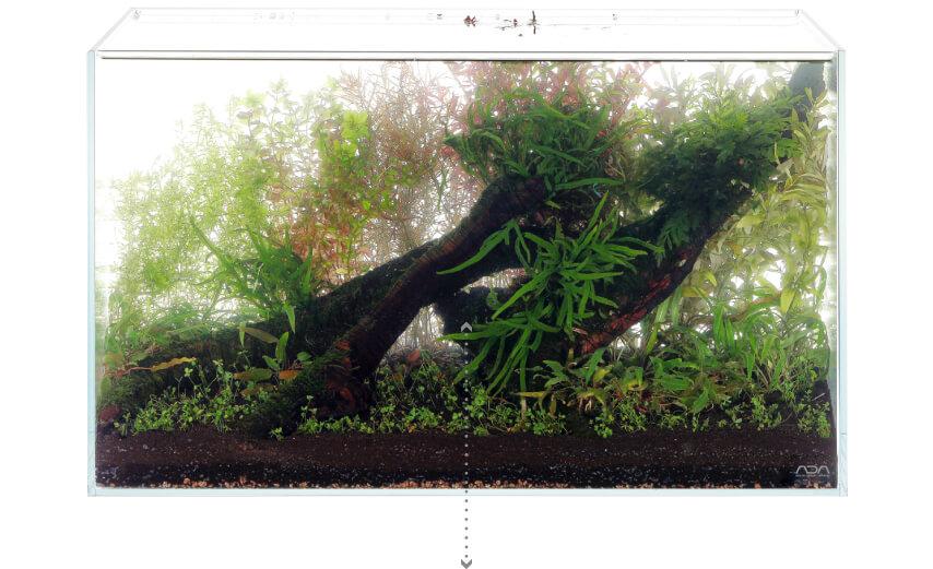 Hoàn thành trồng cây và đổ nước