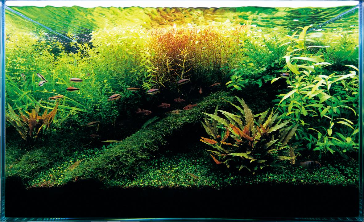 Nature Aquarium Starting From Zero Ada Nature Aquarium