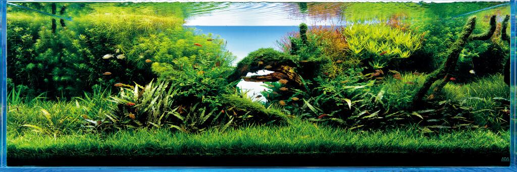 ada nature aquarium founder takashi amano