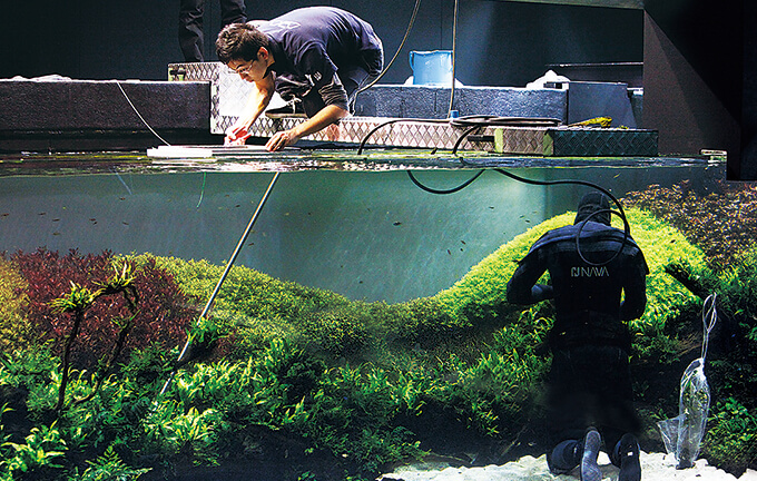 Behind The Scenes   Daily Maintenance Works To Keep The Aquascape Beautiful