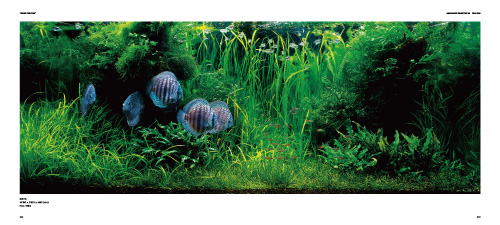 "Takashi Amano Photography Book ""THE ART OF NATURE AQUARIUM""  P48-49"