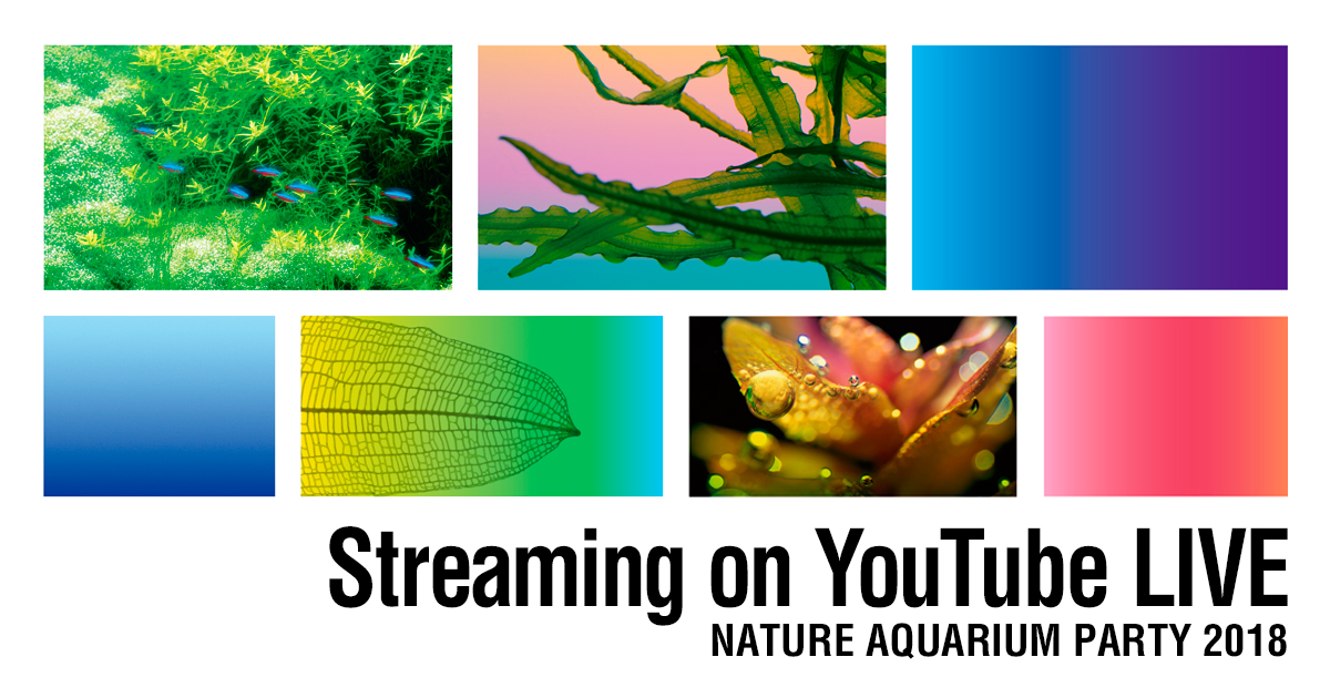 Nature Aquarium party 2018 Broadcast on YouTube LIVE