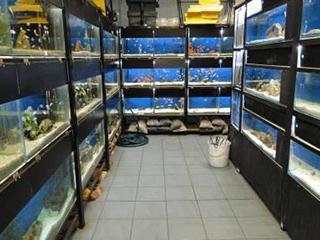 the vip pet store pets world