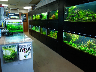 ADA   DISTRIBUTORS   U.S.A.   Aquascapes LLC