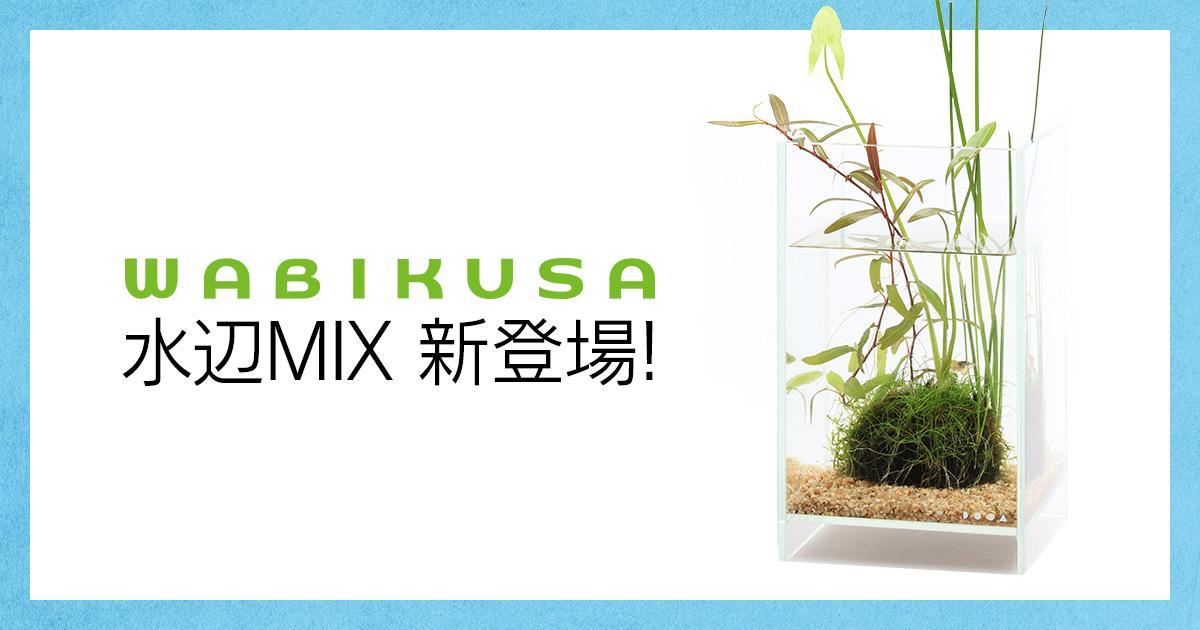 「佗び草 水辺MIX」発売のお知らせ