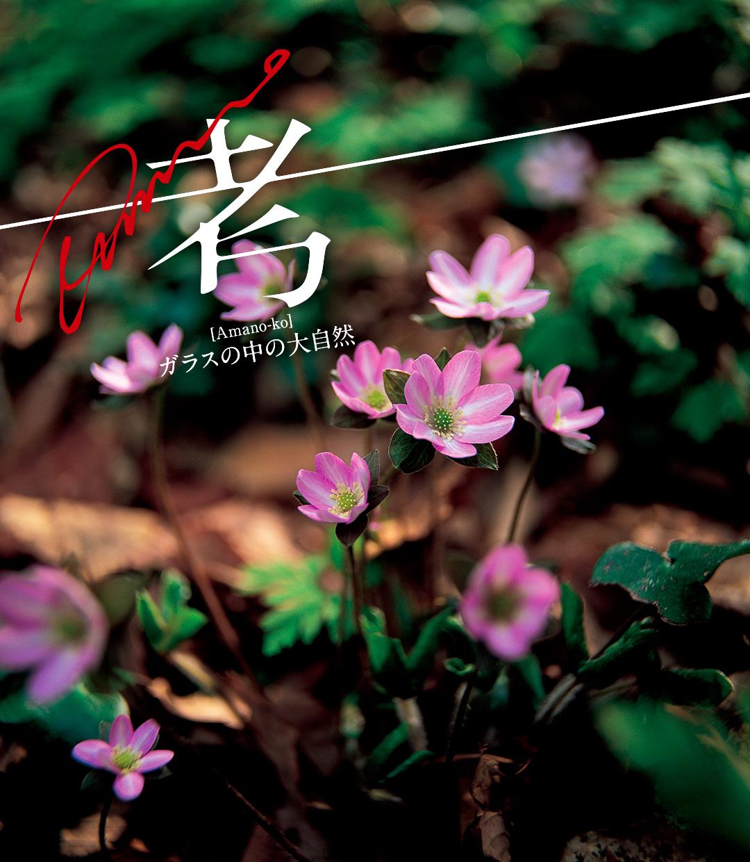 Amano考 —ガラスの中の大自然— 第5回