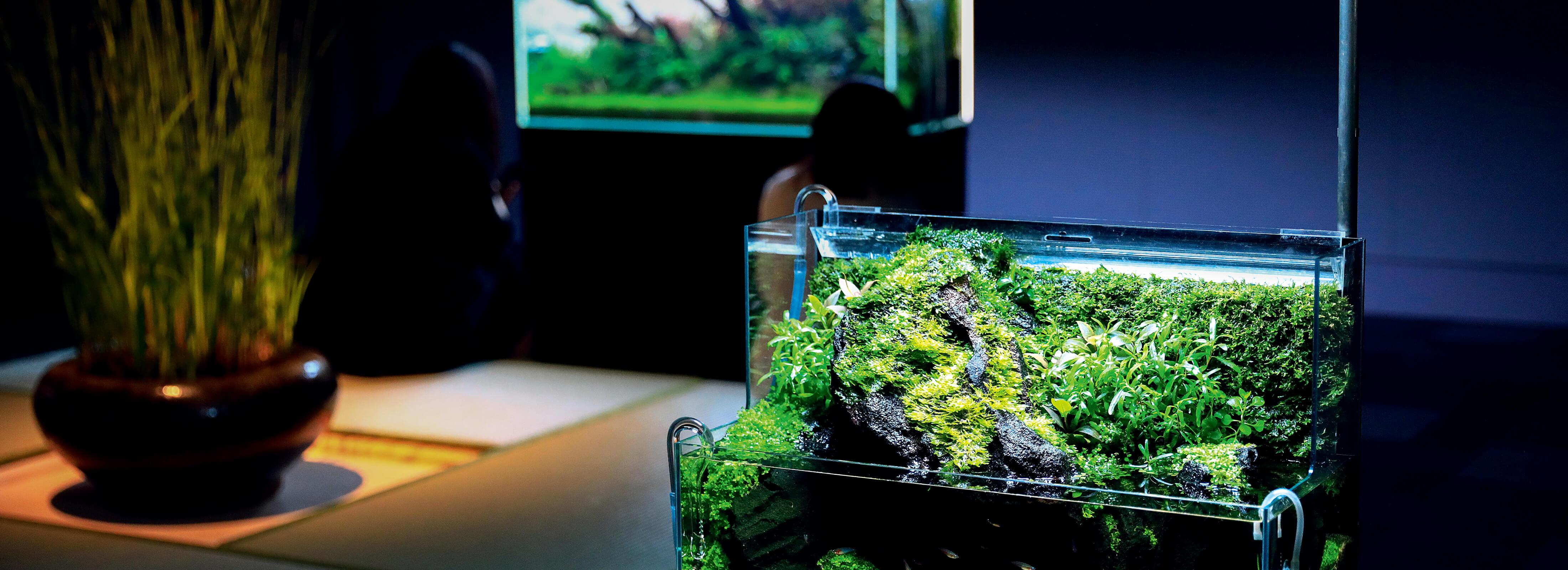 表参道に現れた「和の空間で鑑賞する美しい水草の世界」とは