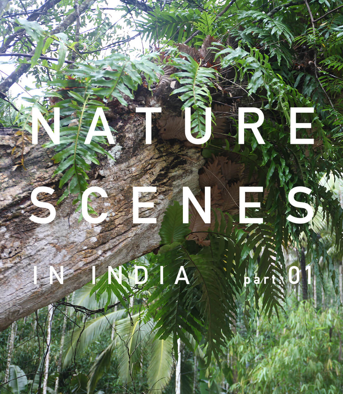 インド南西部・ケーララ州の景色 part.1