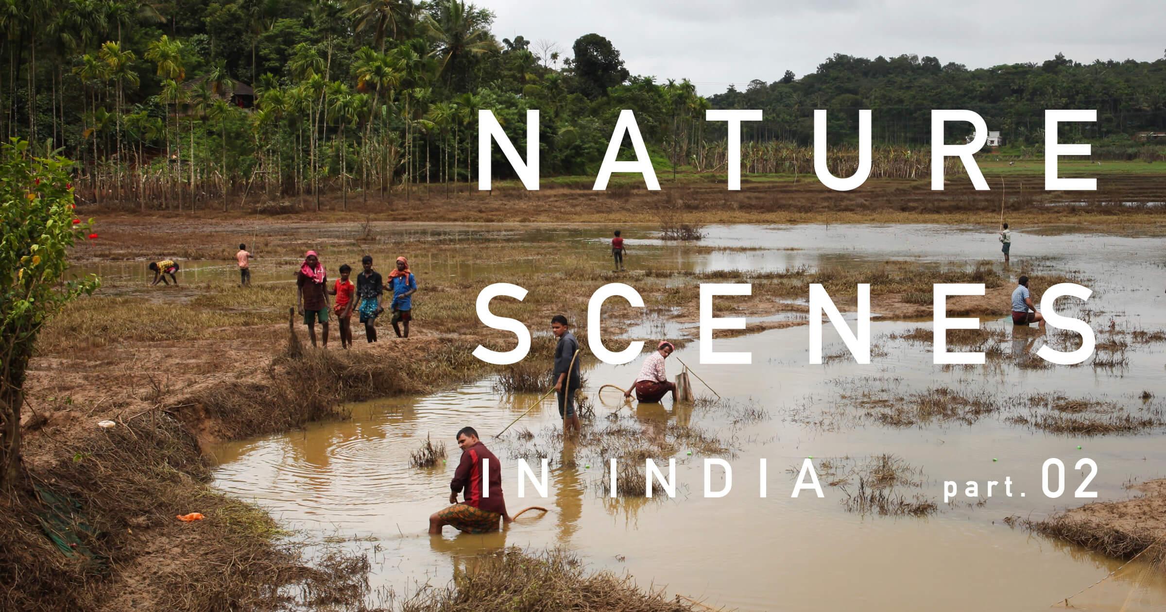 インド南西部・ケーララ州の景色 part.2