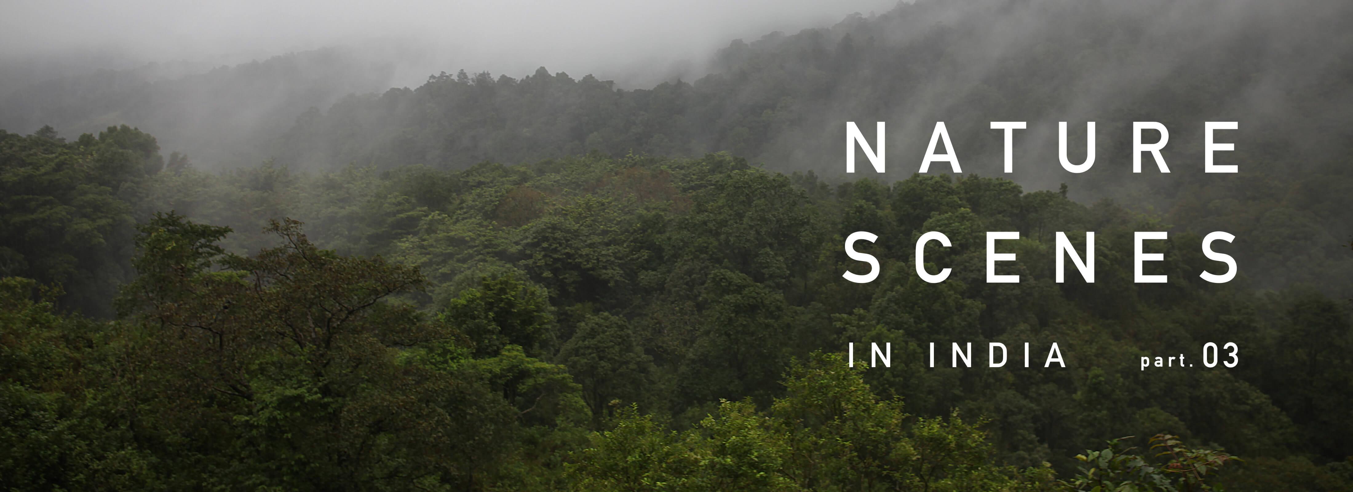 インド南西部・ケーララ州の景色 part.3