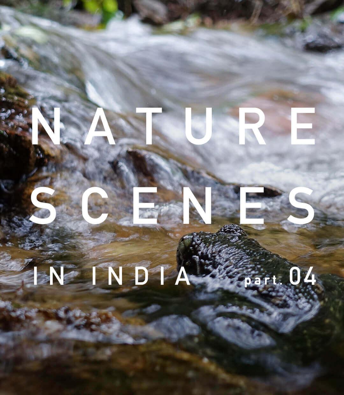 インド南西部・ケーララ州の景色 part.4