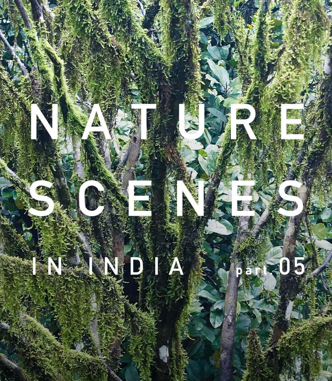 インド南西部・ケーララ州の景色 part.5