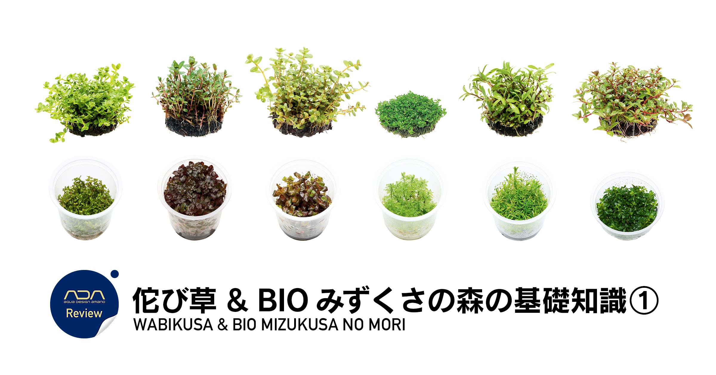佗び草 & BIO みずくさの森の基礎知識 ①