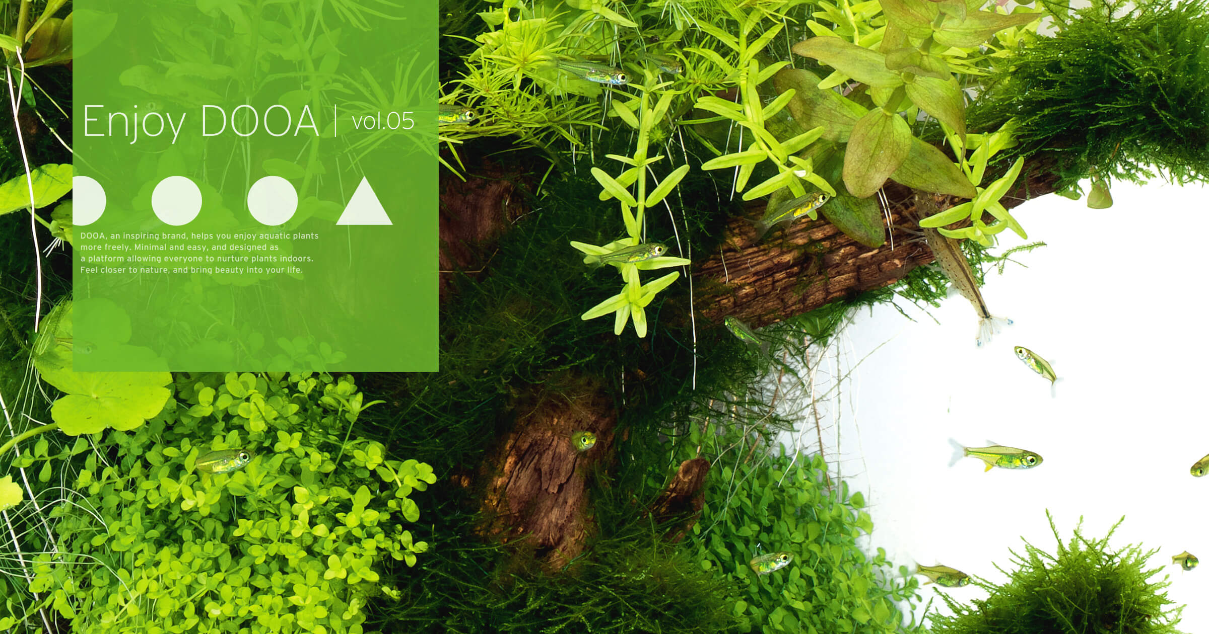 Enjoy DOOA vol.05 流木で開放感を演出した小型水槽