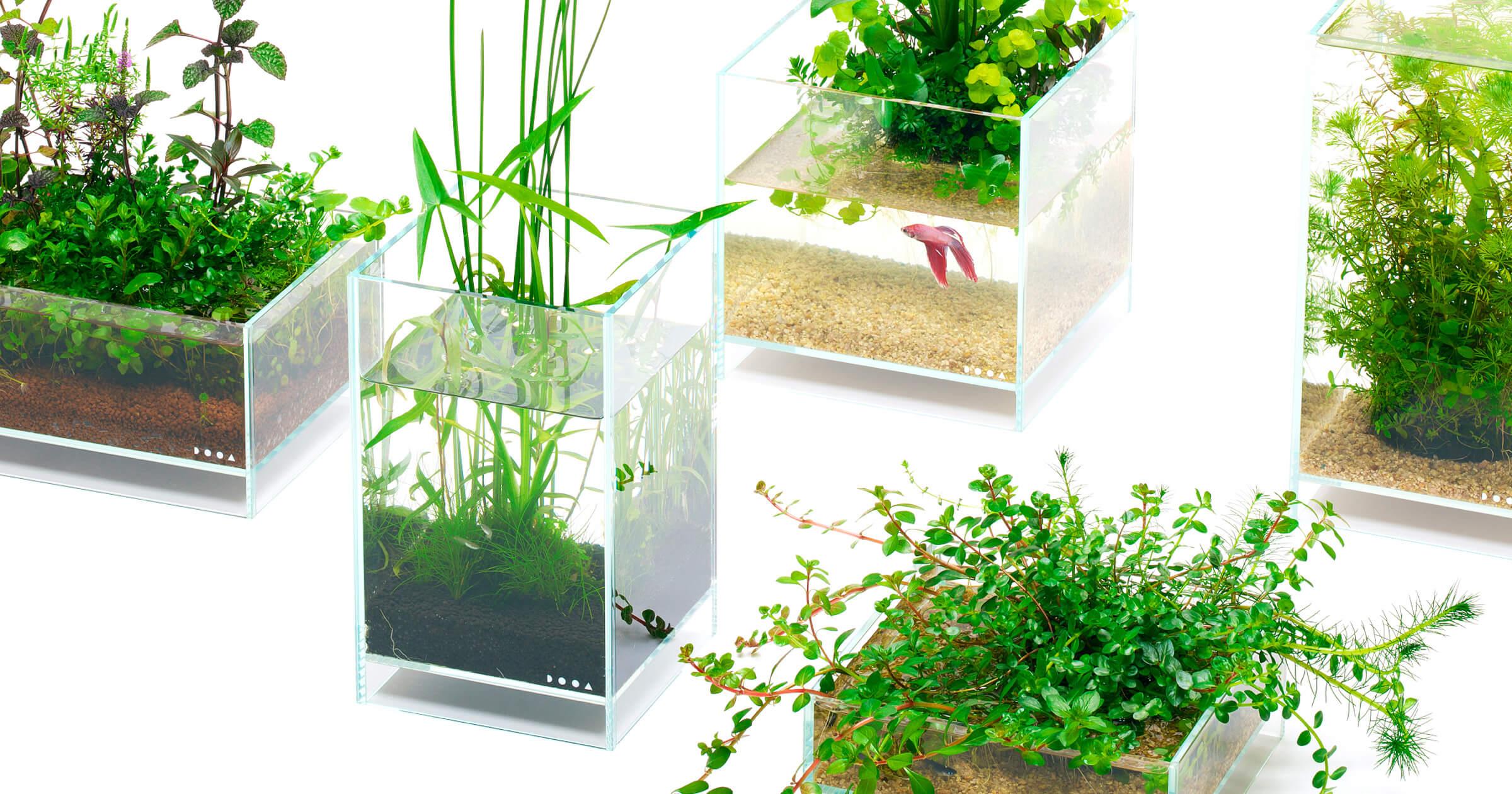 水草を手軽に楽しめる「佗び草」でインドアビオトープ