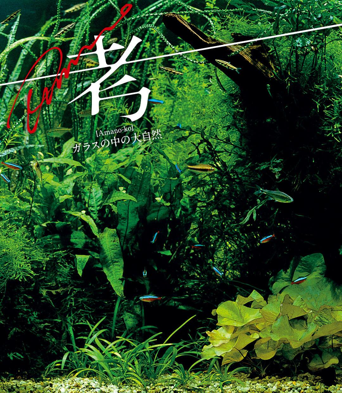 Amano考 —ガラスの中の大自然— 第10回「理想の苔イーター」
