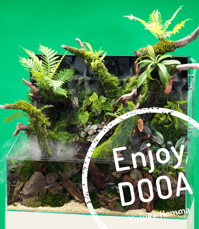Enjoy DOOA vol.06 ジャングルプランツと流木のアクアテラリウム