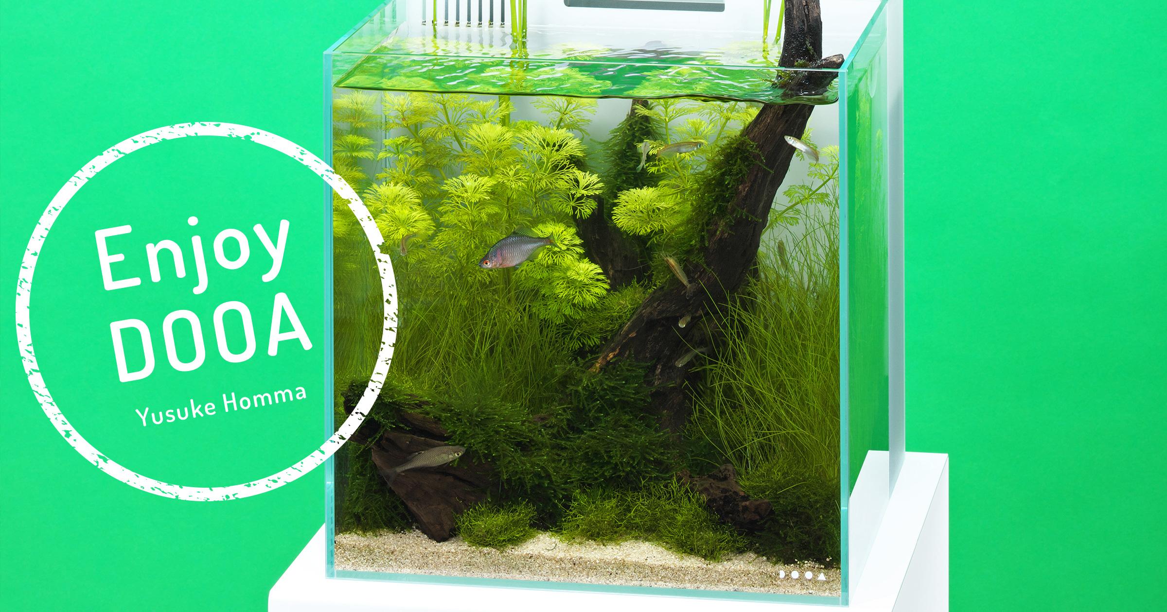 Enjoy DOOA 夏の潟をイメージしたシンプルな日本産水景