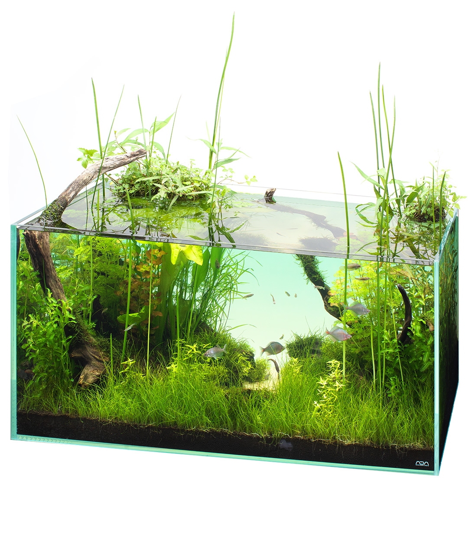 NATURE IN THE GLASS 「失われた鎧潟を再現水草がつくる魚たちの隠れ家」
