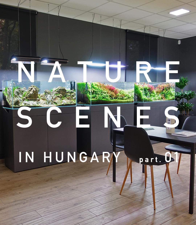 ハンガリーの水草レイアウト事情