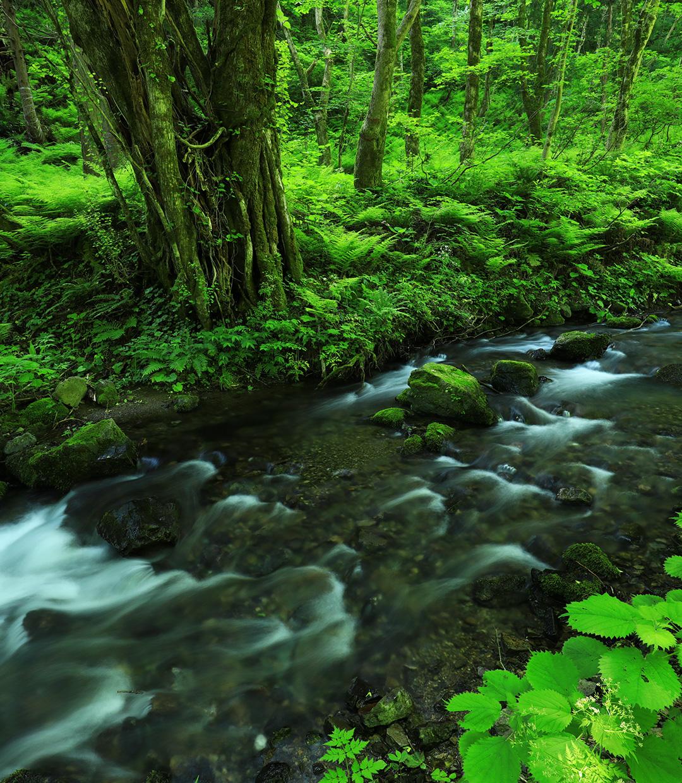 FIELD REPORT -自然から学ぶ陰性水草レイアウトのヒント-