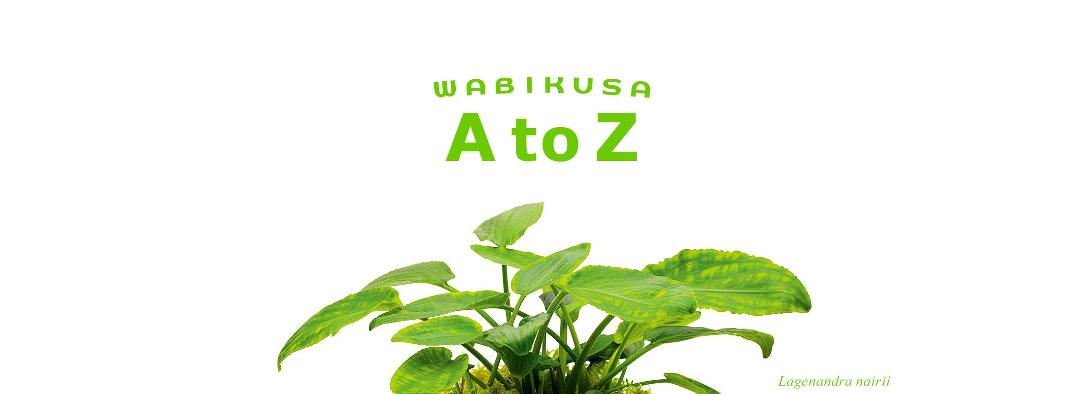 佗び草AtoZ 第4回「ラゲナンドラ・ナイリー」