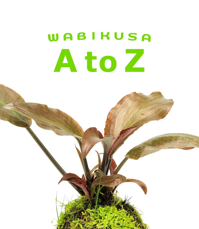 佗び草AtoZ 第5回「ラゲナンドラ・ミーボルディ・ヴィネイチャンドラ」
