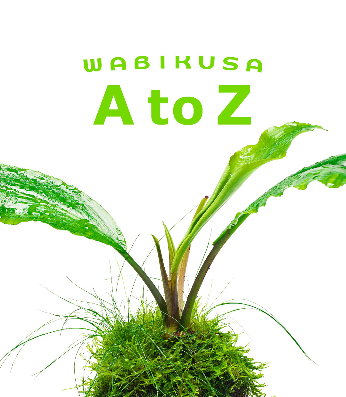 佗び草AtoZ 第6回「ラゲナンドラ・トキシカリア」