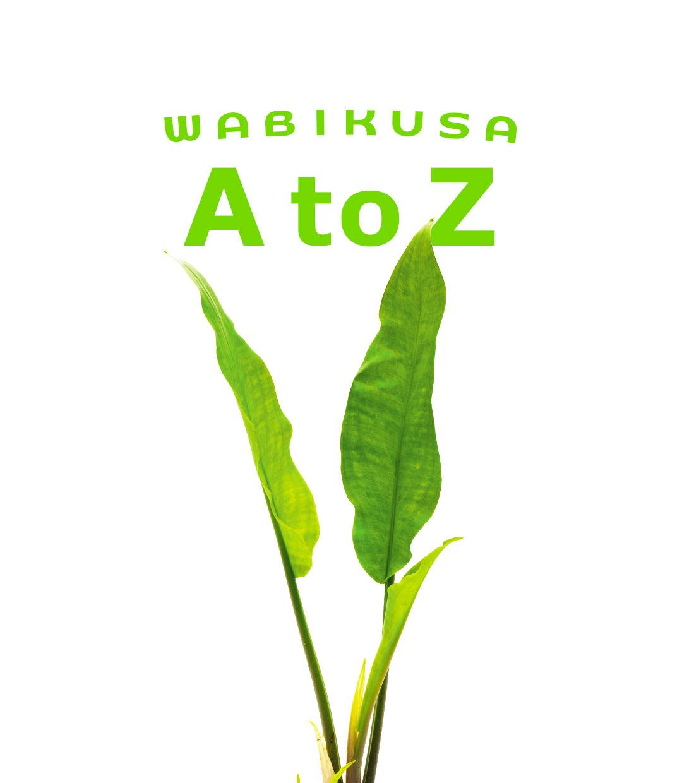 佗び草AtoZ 第7回「ラゲナンドラ・オバタ」