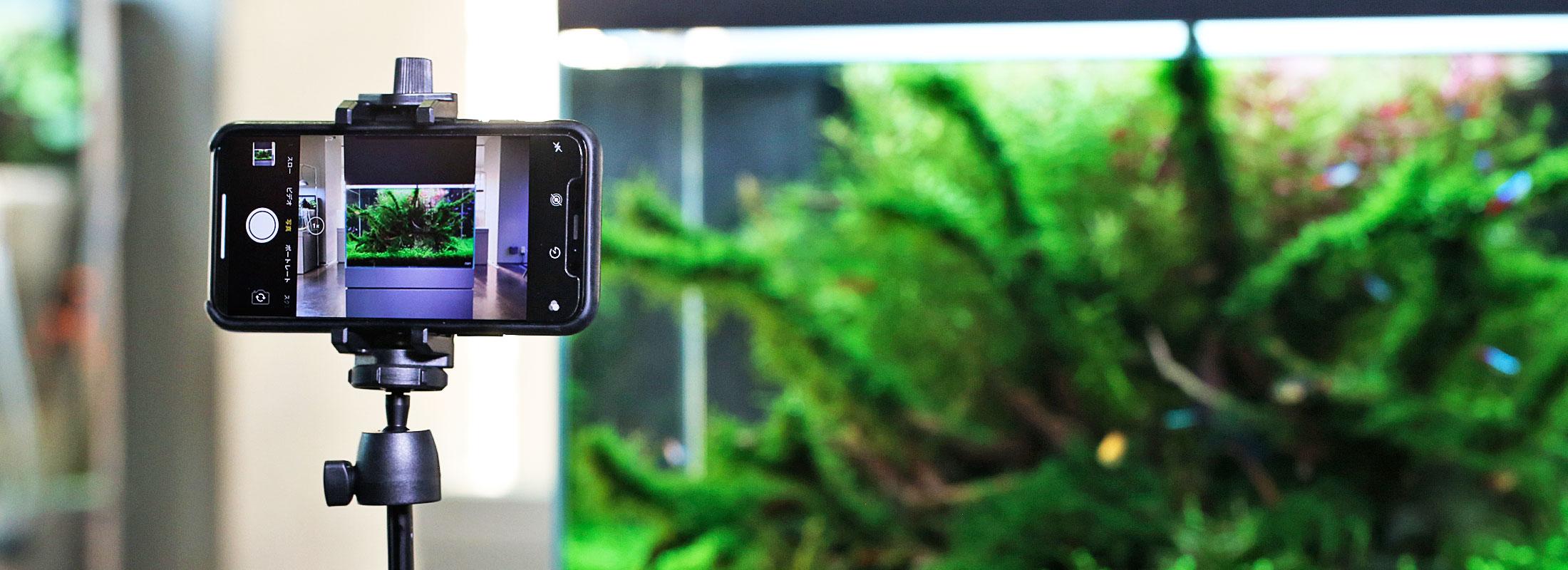 【世界水草レイアウトコンテスト応募ガイド】水草水槽をキレイに撮るためのテクニック「スマホ編」
