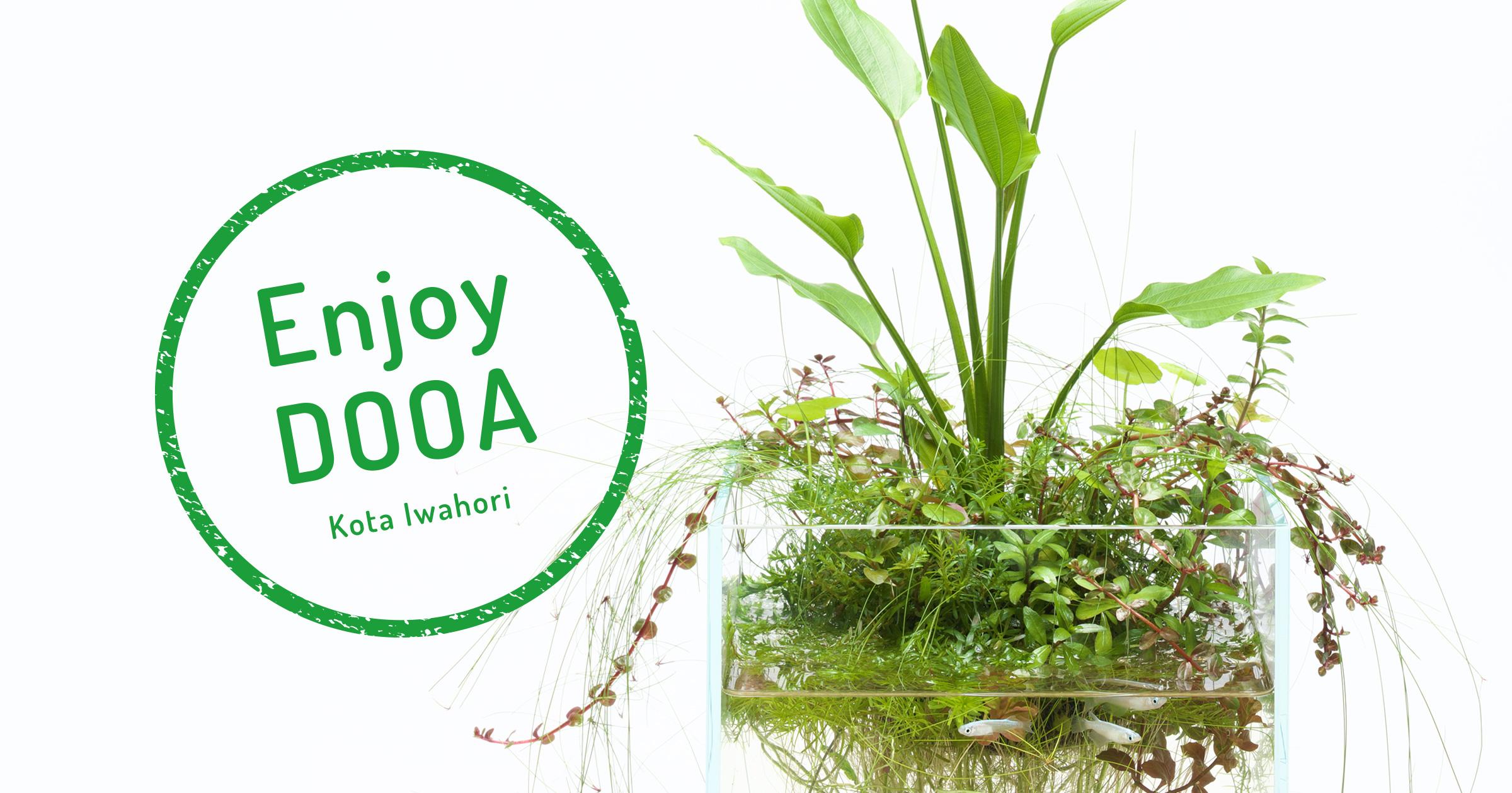 Enjoy DOOA「ネオグラスエアで楽しむエキノドルスの葉姿」