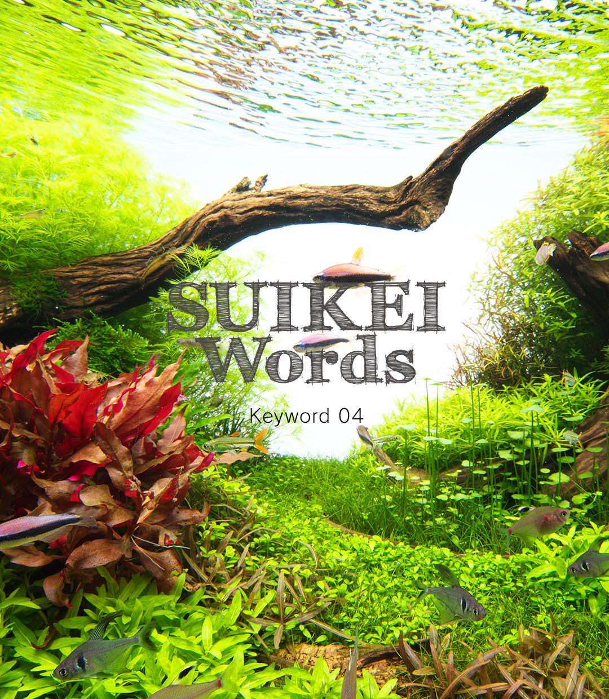 水景ワード Keyword 04 「水草の配植」