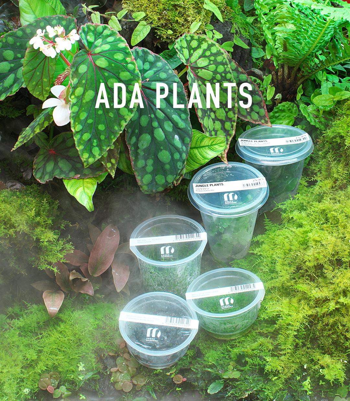 ADA PLANTS 「植物が進化するがごとくその形態は多様化する」