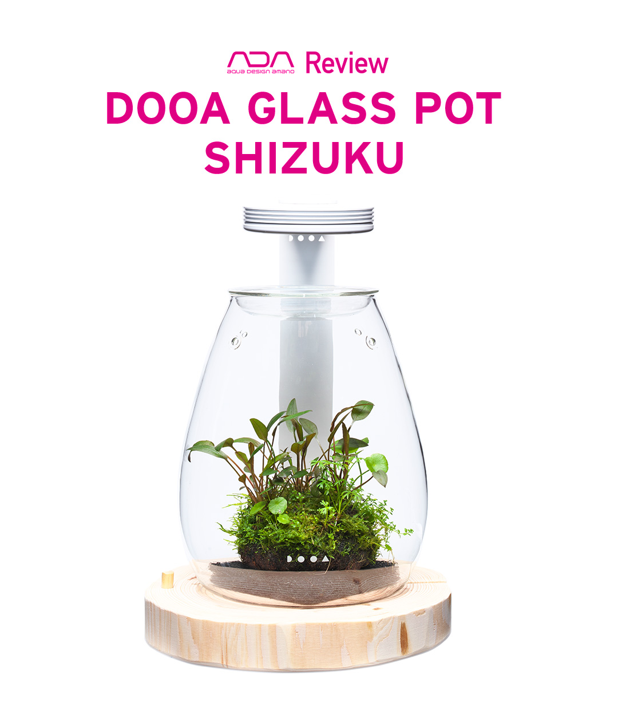 GLASS POT SHIZUKU 「新しいグリーンリラクゼーション」