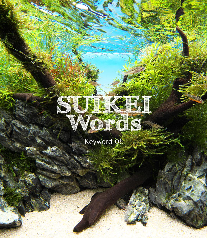 水景ワード Keyword 05 「小さく見せないレイアウト」