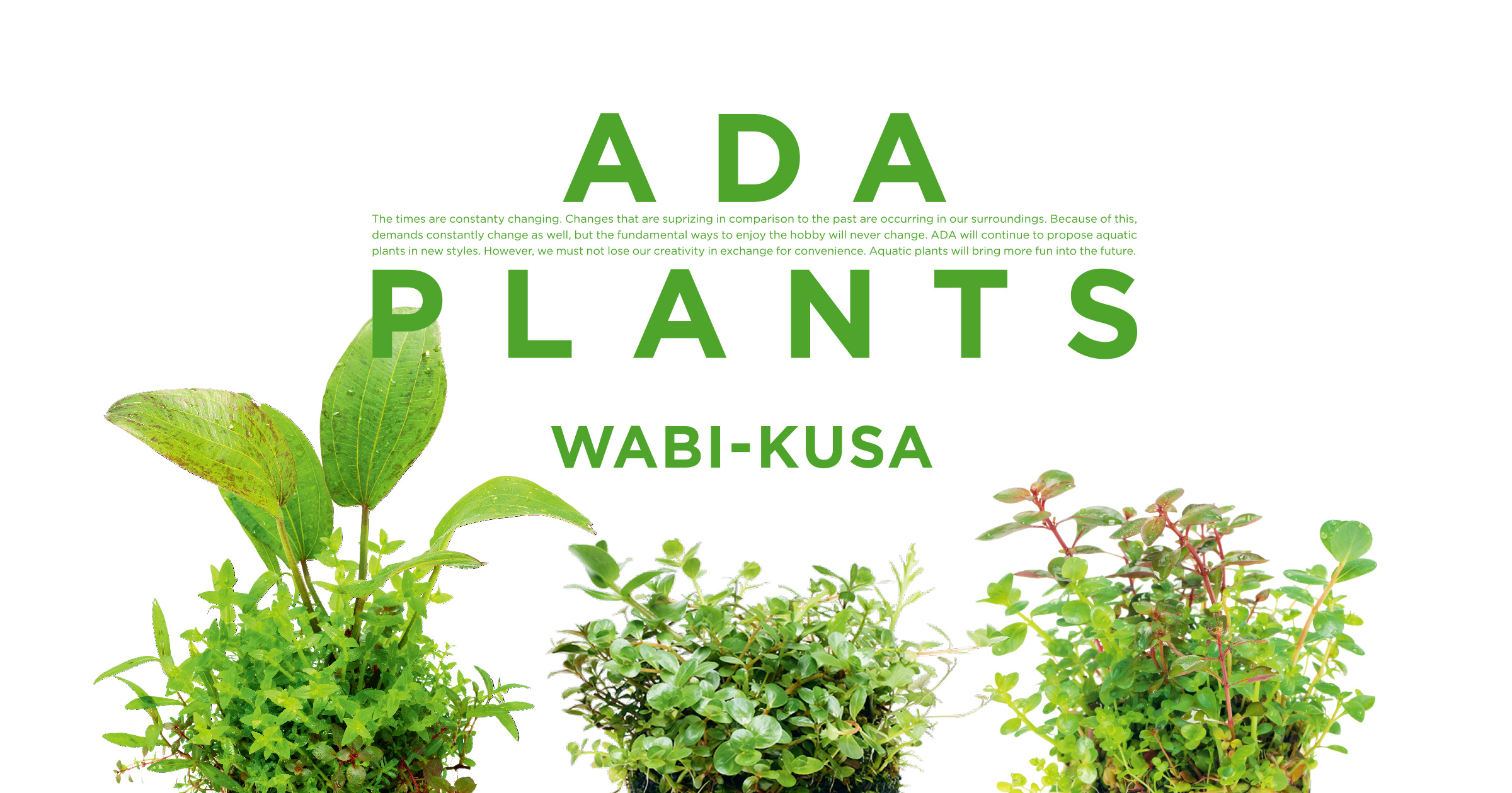 ADA PLANTS「佗び草」