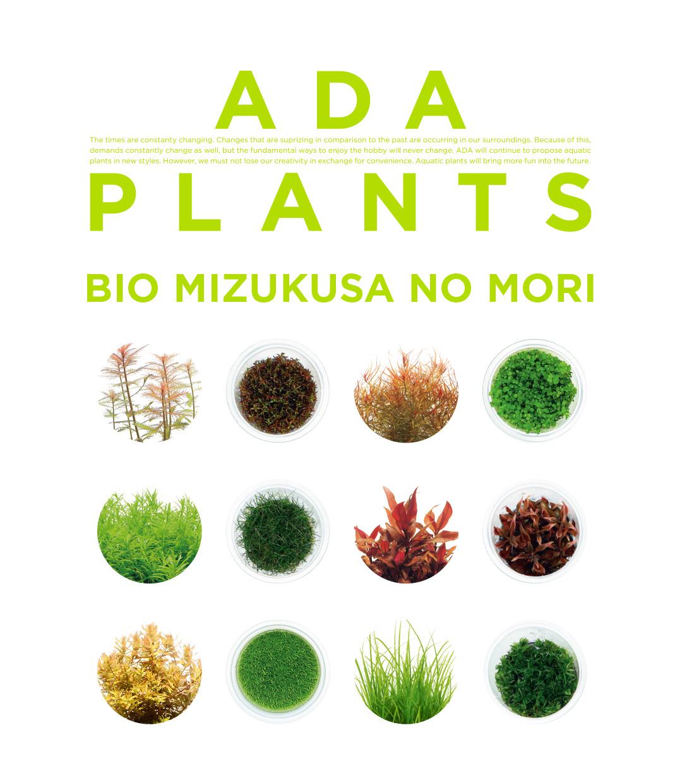 ADA PLANTS「BIO みずくさの森 65種類を一挙紹介」