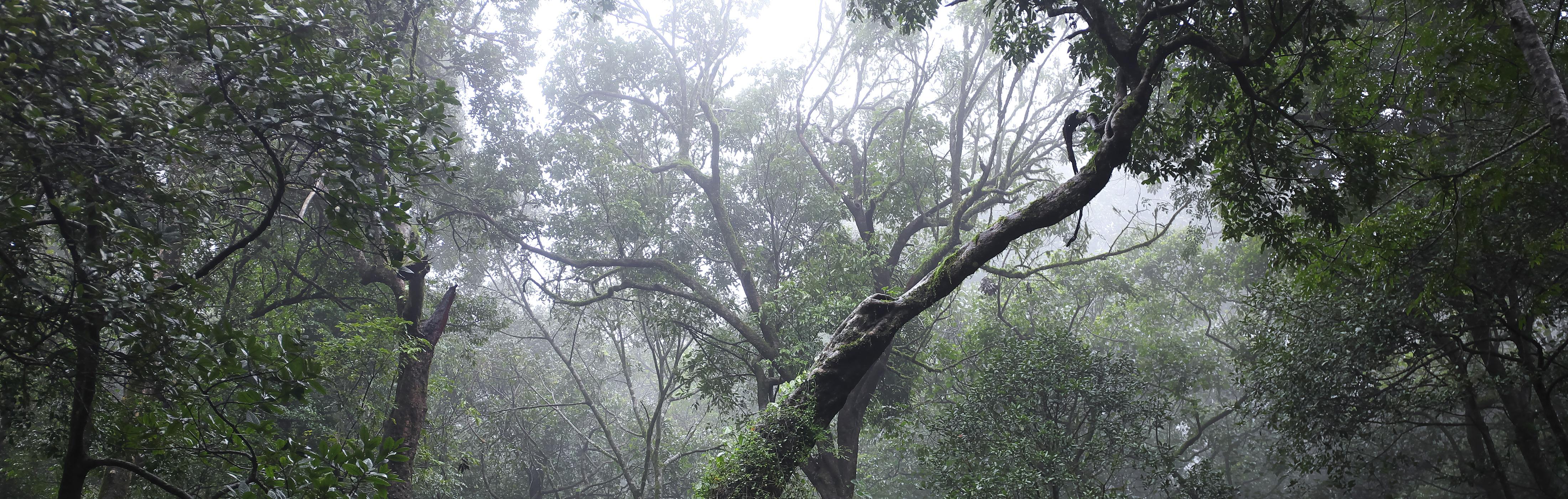 HOW TO ENJOY TERRA BASE PART1 「雲霧林への憧れ」