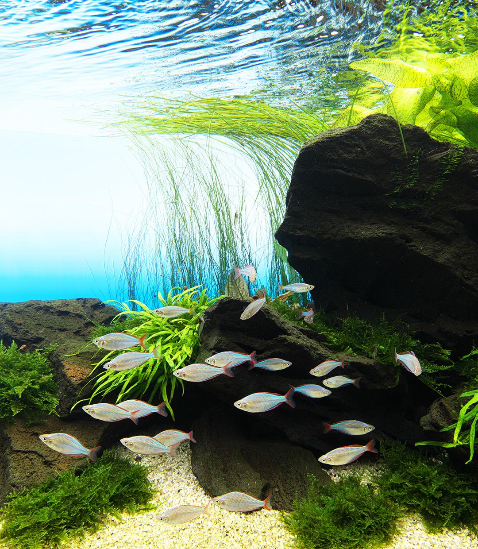 NATURE IN THE GLASS 「豊かな自然の源の演出としてオフィス空間に導入されたネイチャーアクアリウム」