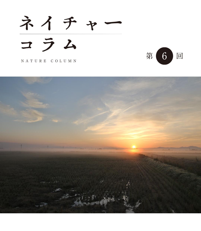 ネイチャーコラム 第6回 「○○○○再発見!」
