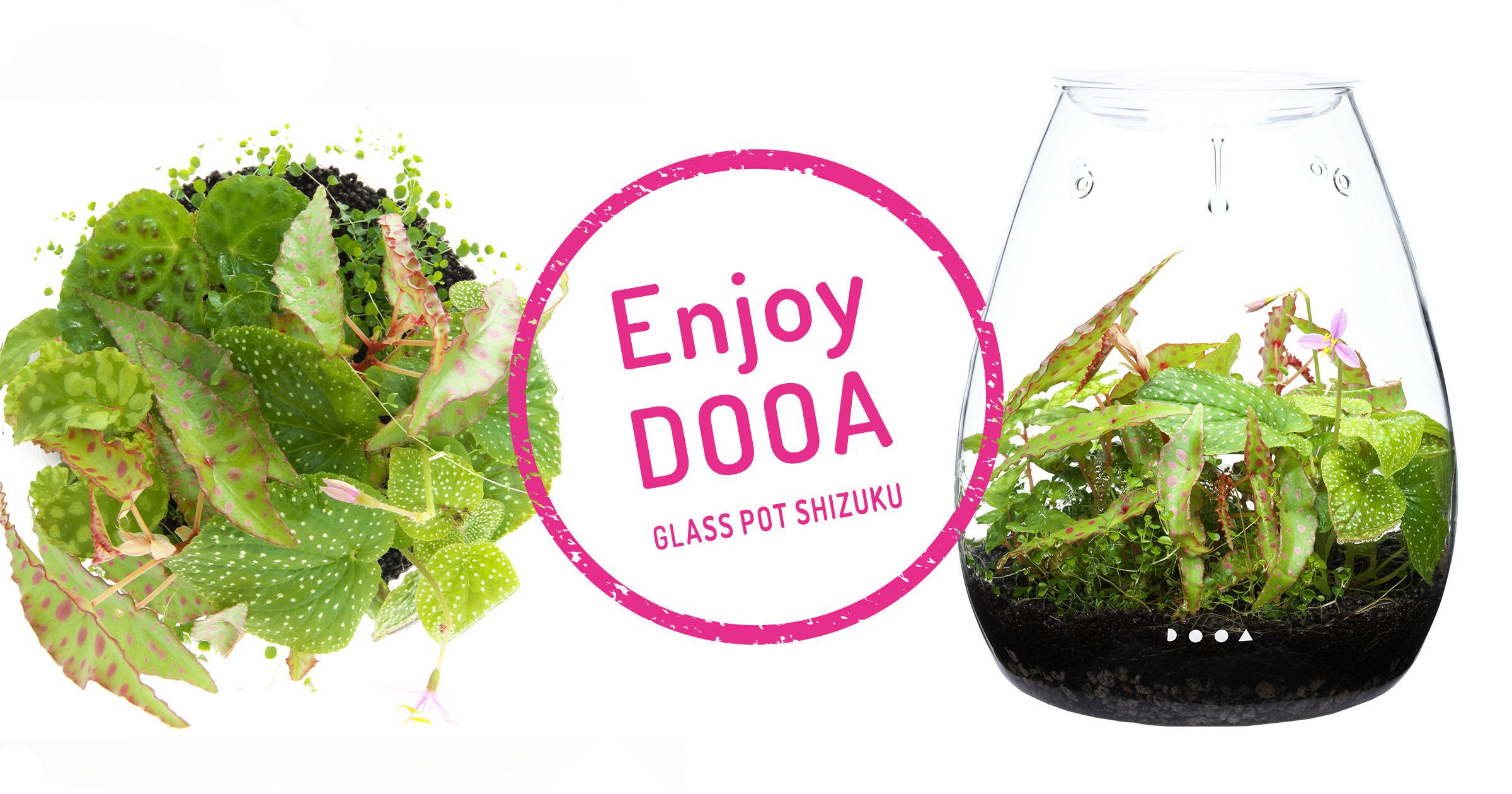 Enjoy DOOA「多湿環境を好むエキゾチックな熱帯植物を楽しむ」