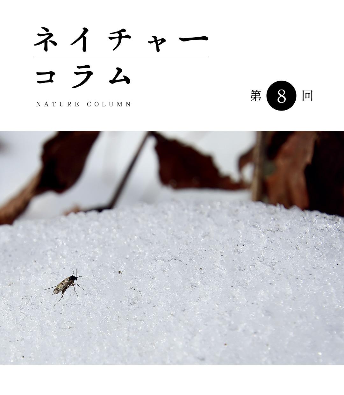 ネイチャーコラム 第8回 「雪中昆虫観察記録!」