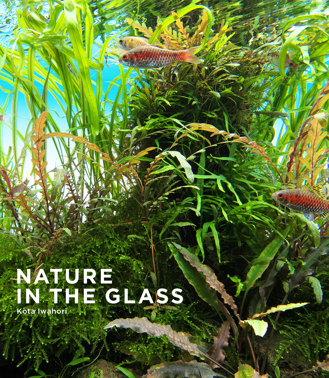 NATURE IN THE GLASS 「川底眩しく」