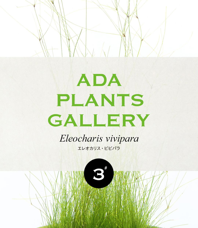 ADA PLANTS GALLERY #03 「エレオカリス・ビビパラ」